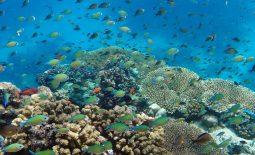Sudan non solo immersioni!!!